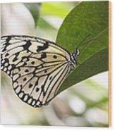 Paper Kite On A Leaf Wood Print