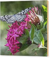 Paper Kite On Fluid Blossoms Wood Print