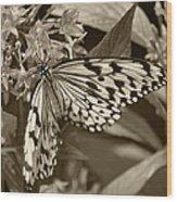 Paper Kite On Frangipani Flowers Wood Print