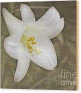 Paper Lily Wood Print