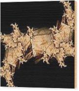 Paper Mache Wood Print