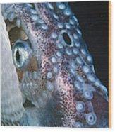Paper Nautilus Port Phillip Bay Wood Print