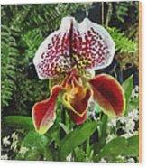 Paph Fiordland Sunset Orchid Wood Print