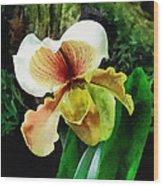 Paph Hellas Westonbirt Orchid Wood Print