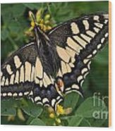 Papilio Machaon Butterfly Sitting On The Lucerne Plant Wood Print