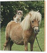 Papillon Riding Shetland Pony Wood Print