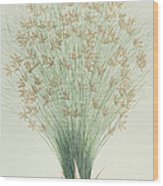 Papyrus Wood Print