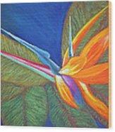 Paradise Pastel Wood Print