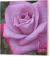 Paradise Rose Wood Print