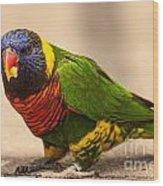 Parakeet With Treat Wood Print