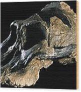 Paranthropus Aethiopicus (knm-wt 17000) Wood Print