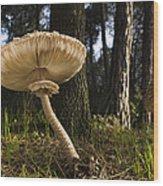 Parasol Mushrooms Pair In Forest Spain Wood Print