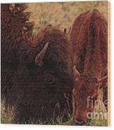 Parent With Newborn Calf Bison Wood Print