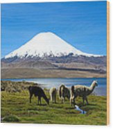 Parinacota Volcano Lake Chungara Chile Wood Print