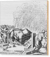 Paris Fete, 16th Century Wood Print