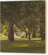 Park By The Rivers Wood Print