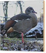 Park Ducks Wood Print