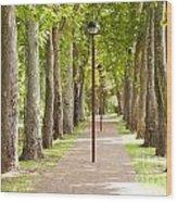 Park Footpath Wood Print