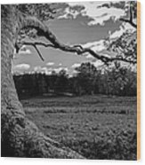 Park In Black And White Wood Print