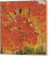Park In Fall Wood Print by Yoshiko Wootten