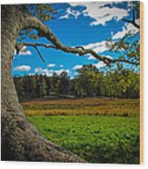 Park In Massachusetts In The Fall Wood Print