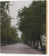 Park Leading To The King Of Thailands Palace Wood Print