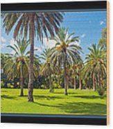 Park Open Area 2 Wood Print