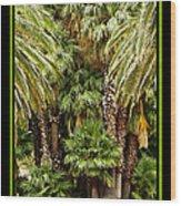 Park Palms Wood Print