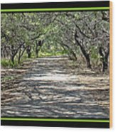 Park Roadway Wood Print