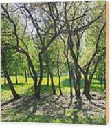 Park Trees Wood Print