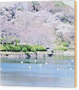 Park With Pond And Cherry Blossoms In Spring Wood Print