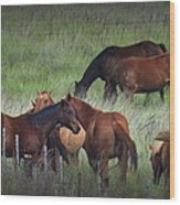 Parker Ranch Horses Wood Print
