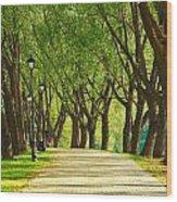 Parkway Among Trees Wood Print