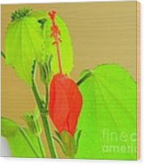 Parlor Maple Flower Wood Print