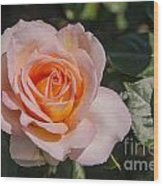 Parnell Pink Rose Wood Print