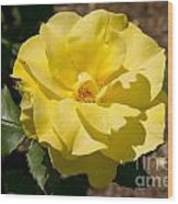 Parnell Yellow Rose Wood Print
