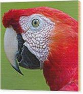 Parrot 35 Wood Print