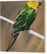 Parrot Beauty Digital Artwork Wood Print