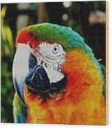 Parrot  Wood Print by Bruce Kessler