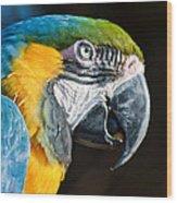 Parrot Close Up Wood Print