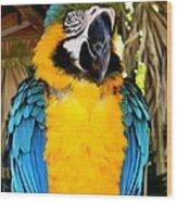 Parrot II Wood Print