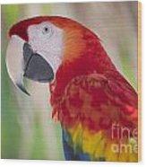 Parrot On Isla Tortuga-207 Wood Print