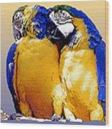 Parrot Passion 1 Wood Print