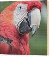 Parrot Profile Wood Print