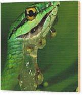 Parrot Snake Eating Frog Eggs Wood Print