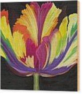 Parrot Tulip 2 Wood Print