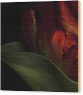 Parrot Tulip 3 Wood Print