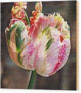Parrot Tulip Wood Print
