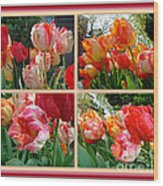 Parrot Tulips In Springtime Philadelphia Wood Print