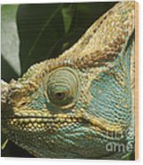 Parsons Chameleon From Madagascar 12 Wood Print